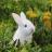 :bunny: